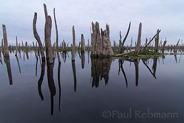 Reflections of a Drowned Forest