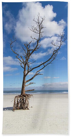Purchase Talbot Island Stilt Tree #2 beach towel
